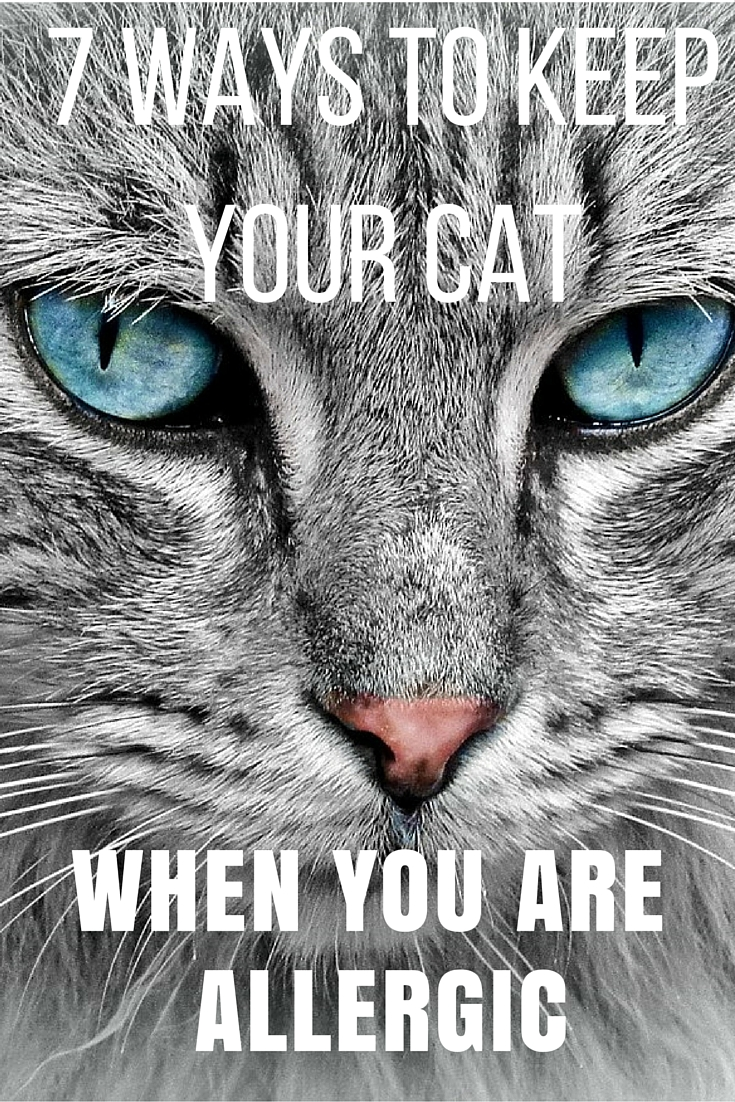 tips for cat allergies