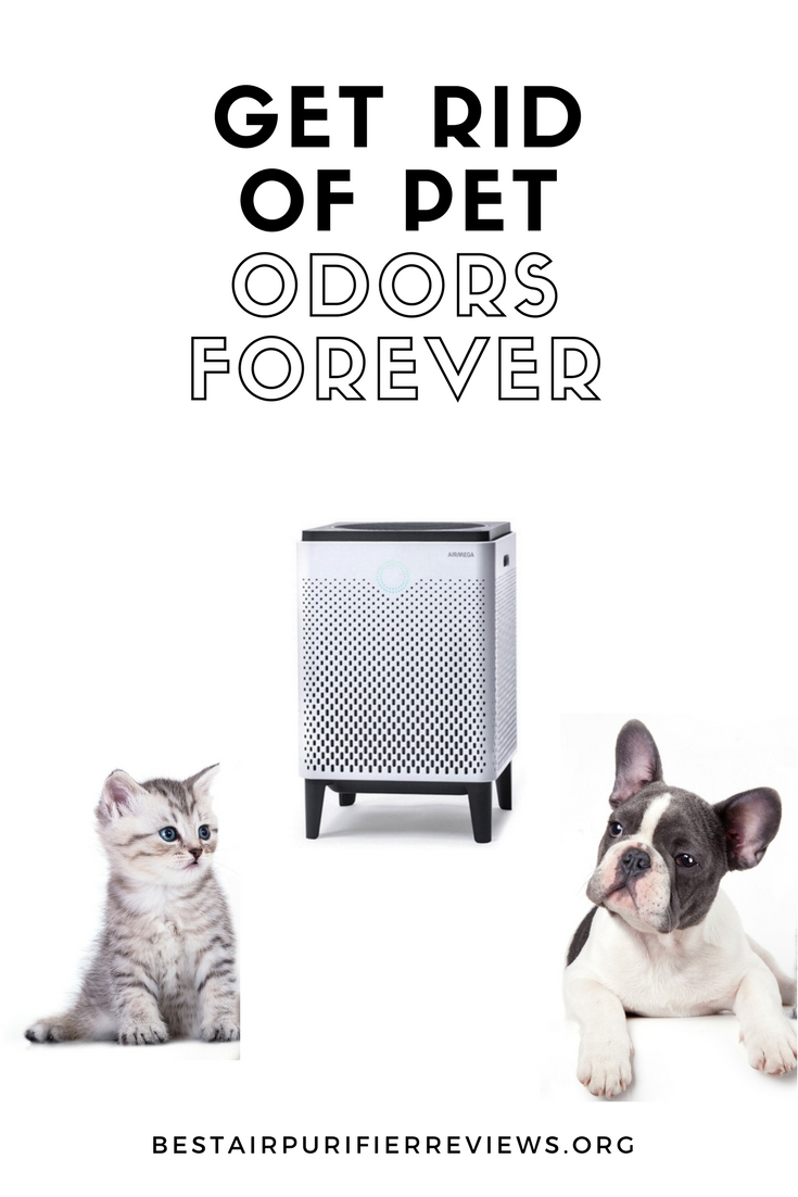 how to get rid of pet odors
