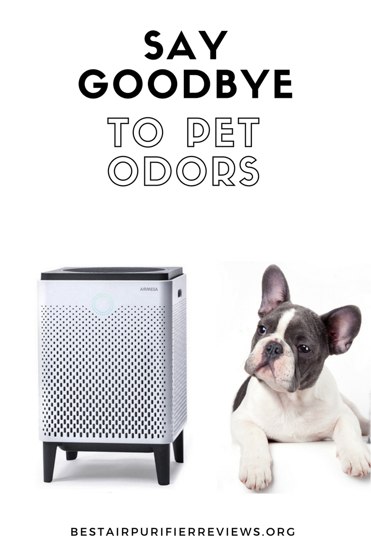 get rid of pet odors for good