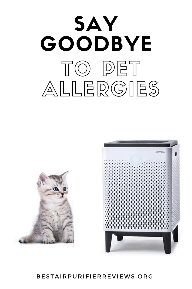 say goodbye to pet allergies